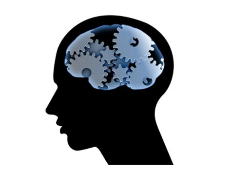Brain and behavior research paper topics - Dundee Social